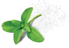 stewia naturalny słodzik