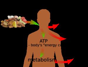 energia z pożywienia 3