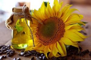 surowiec oleisty - słonecznik